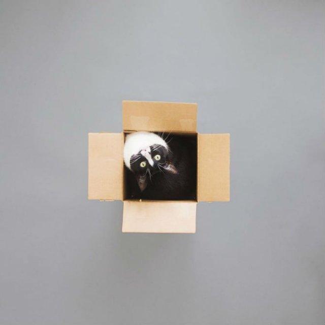 Cheeto, o pisica haioasa, intr-un pictorial trasnit - Poza 12