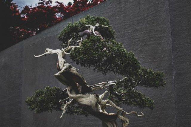 Unicitatea bonsailor, intr-un pictorial superb - Poza 16