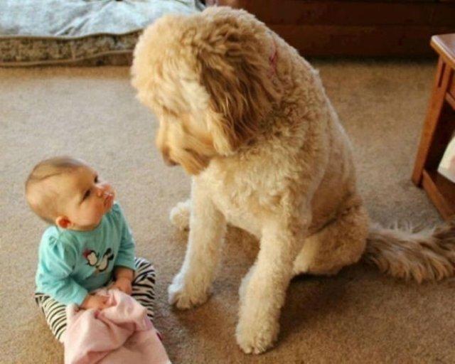 Copii si animale, intr-un pictorial adorabil - Poza 5