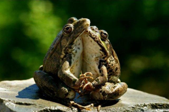 Dragostea pluteste in aer: Tandrete in lumea animala - Poza 21