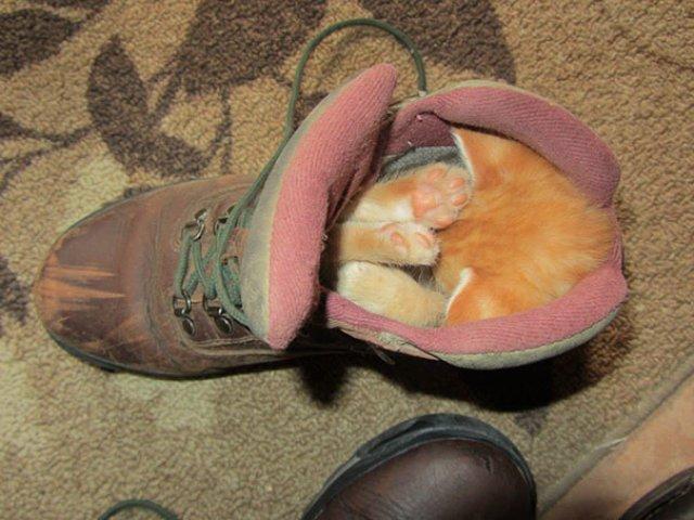 Cele mai haioase pozitii in care dorm animalele - Poza 7