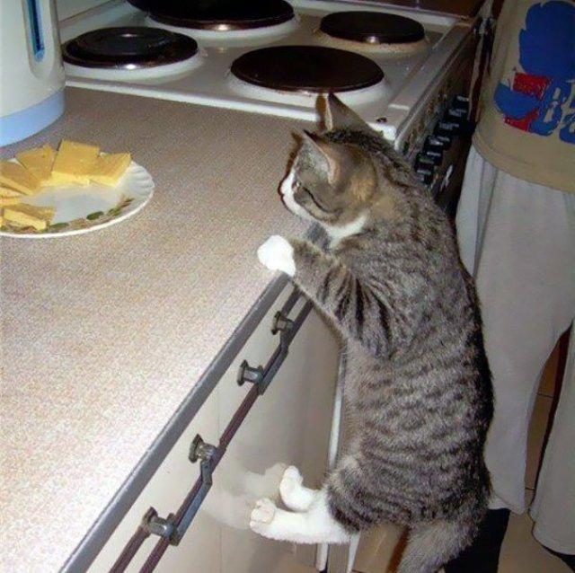 Pisici hoate, prinse in actiune - Poza 6