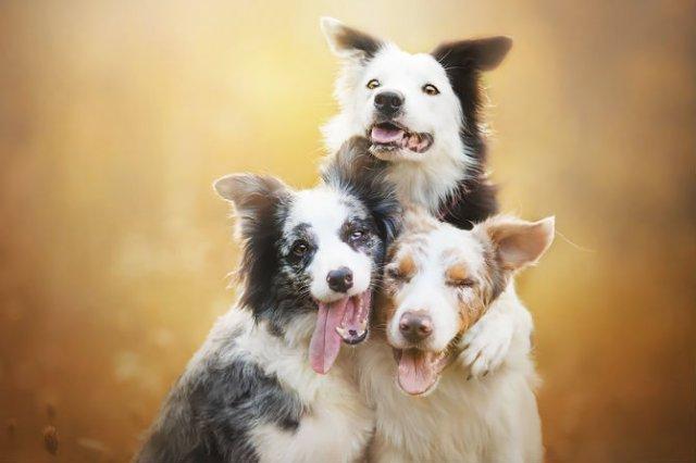 Cele mai frumosi caini, in poze de exceptie - Poza 11
