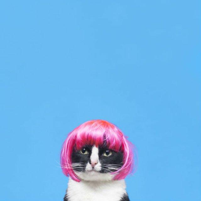 Cheeto, o pisica haioasa, intr-un pictorial trasnit - Poza 11