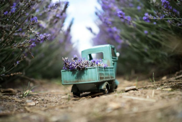 Explorand lumea cu autovehicule in mininatura - Poza 2