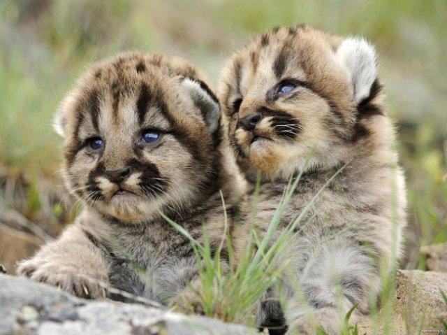 14 Poze cu animalute irezistibil de dragalase - Poza 5