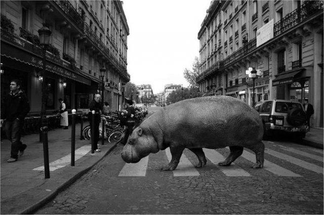 Invazia animalelor salbatice, intr-o societate toleranta - Poza 1
