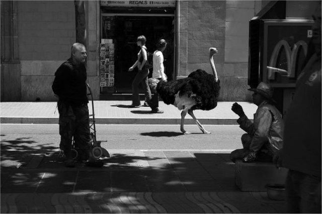 Invazia animalelor salbatice, intr-o societate toleranta - Poza 10