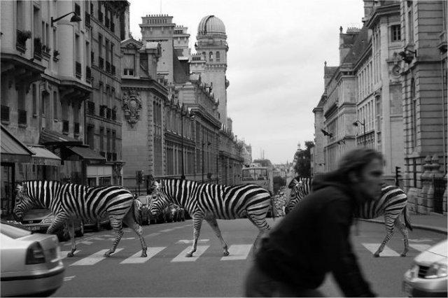 Invazia animalelor salbatice, intr-o societate toleranta - Poza 4