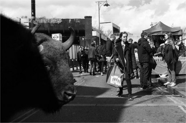 Invazia animalelor salbatice, intr-o societate toleranta