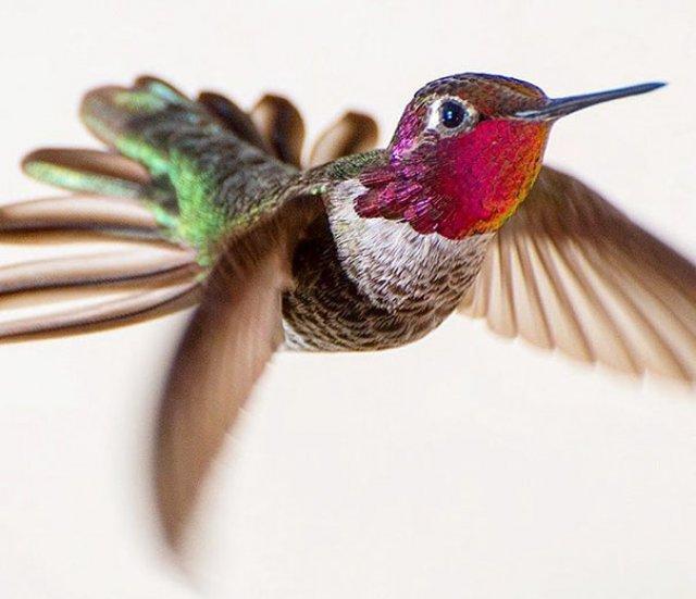 Frumusetea pasarilor colibri - Poza 1