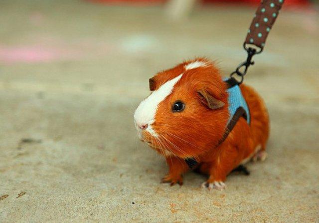Unele mai dragalase ca altele: 14 Poze cu animale adorabile - Poza 13
