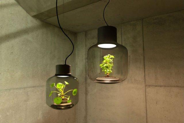 Lampa-ghiveci: Un ornament viu si luminos - Poza 1