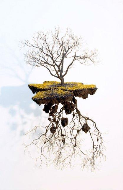Metafora vizuala a dezradacinarii - Poza 5