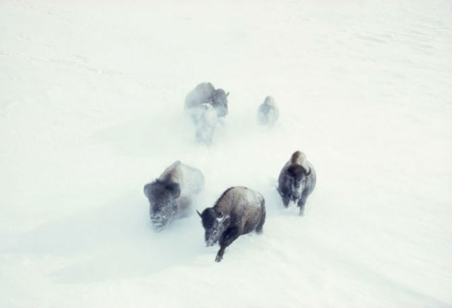15 Fotografii nepublicate, din arhivele National Geographic - Poza 4