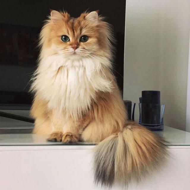 Smoothie, cea mai fotogenica pisica din lume - Poza 4