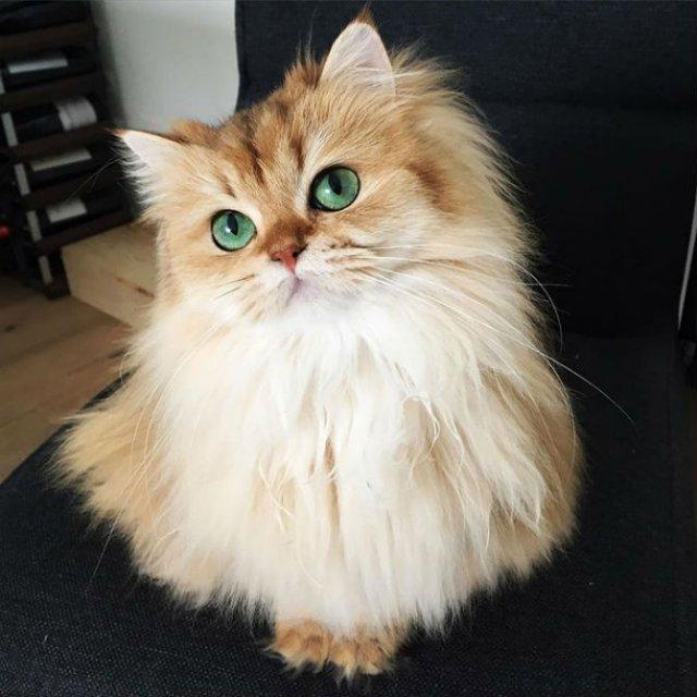 Smoothie, cea mai fotogenica pisica din lume - Poza 5