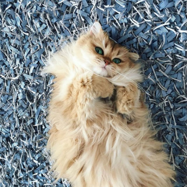 Smoothie, cea mai fotogenica pisica din lume - Poza 7