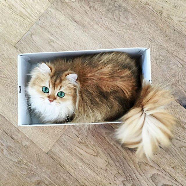 Smoothie, cea mai fotogenica pisica din lume - Poza 8