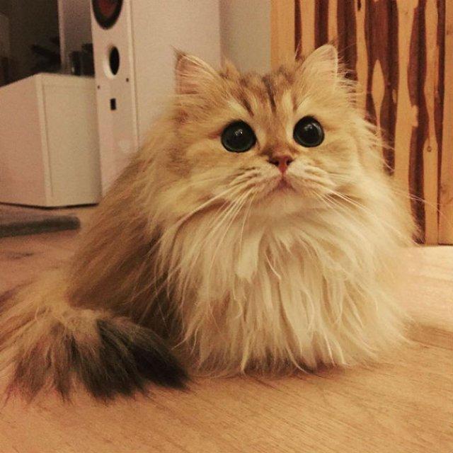 Smoothie, cea mai fotogenica pisica din lume - Poza 9