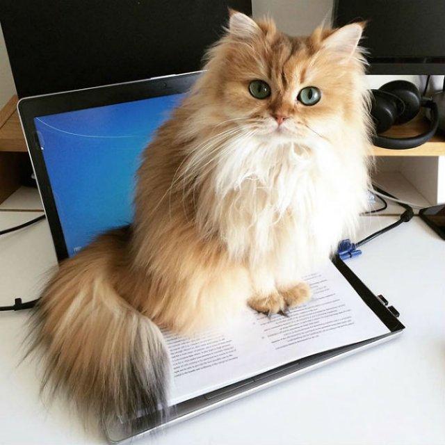 Smoothie, cea mai fotogenica pisica din lume - Poza 10