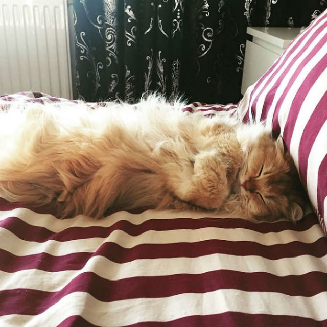 Smoothie, cea mai fotogenica pisica din lume - Poza 1