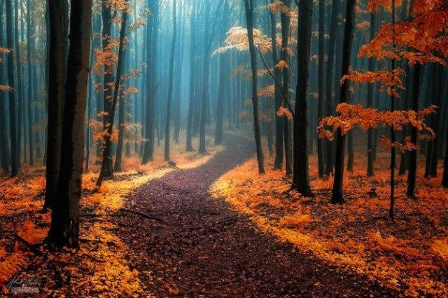 Un vis de toamna, printre copaci - Poza 1