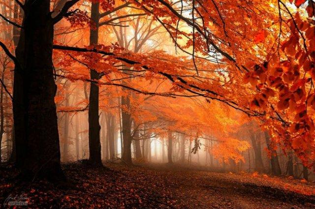 Un vis de toamna, printre copaci - Poza 2