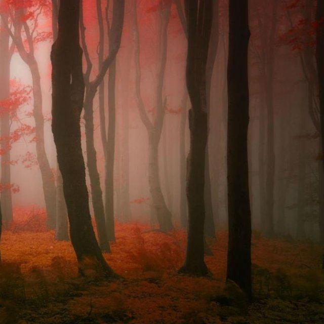 Un vis de toamna, printre copaci - Poza 3