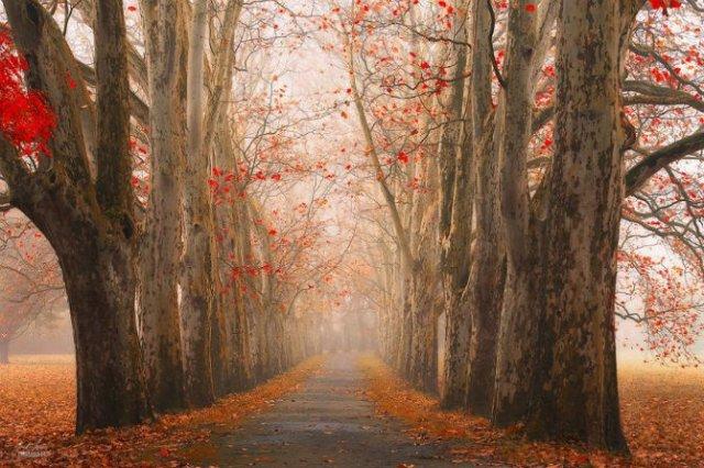 Un vis de toamna, printre copaci - Poza 4