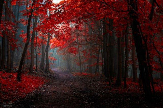 Un vis de toamna, printre copaci - Poza 5
