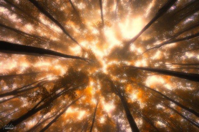 Un vis de toamna, printre copaci - Poza 6