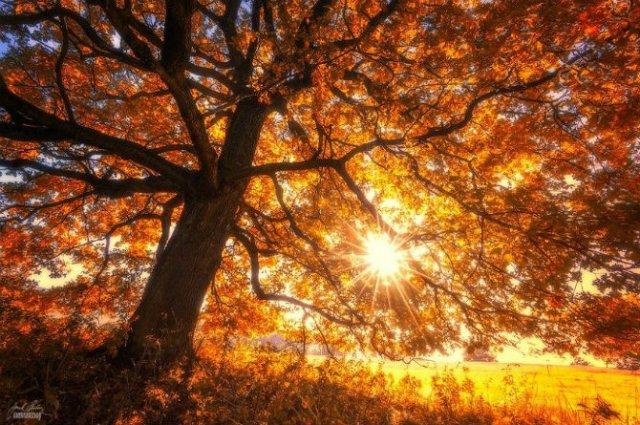 Un vis de toamna, printre copaci - Poza 7