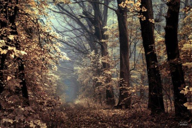 Un vis de toamna, printre copaci - Poza 8