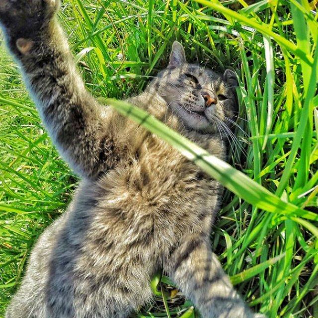 Manny, pisica zurlie care-si face selfie-uri - Poza 8