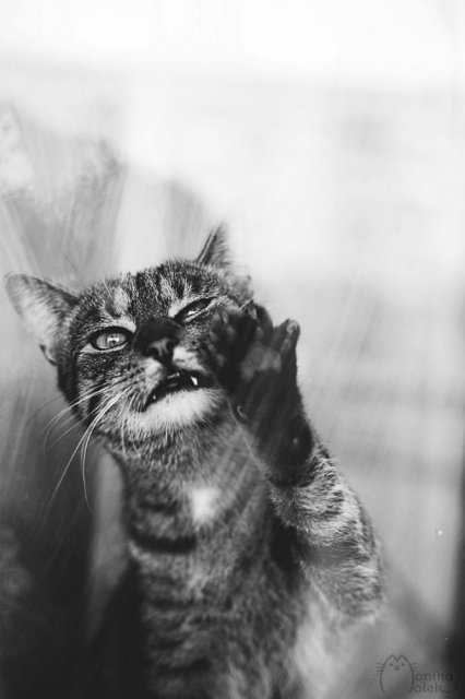 Pisici in alb si negru: Cel mai vibrant pictorial cenusiu cu feline - Poza 10