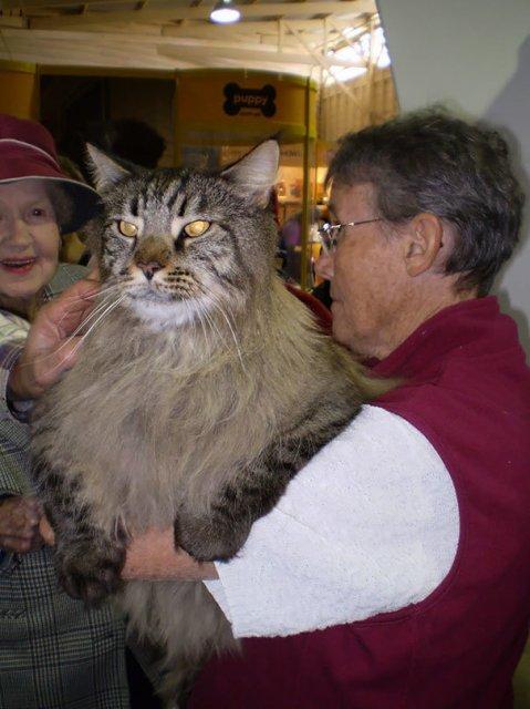 Feline XXL: Cele mai mari pisici din lume - Poza 4