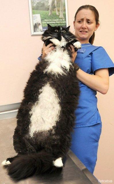 Feline XXL: Cele mai mari pisici din lume - Poza 7