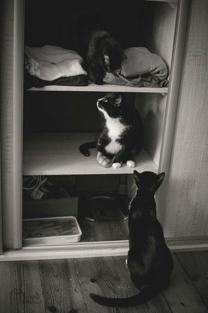 Pisici in alb si negru: Cel mai vibrant pictorial cenusiu cu feline - Poza 9