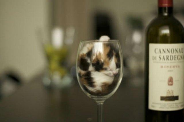 8 poze cu pisici inghesuite prin cele mai ciudate locuri - Poza 7