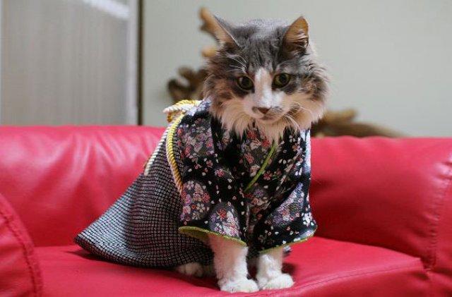 Pisicile in chimonouri fac furori in Japonia - Poza 1