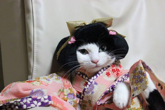 Pisicile in chimonouri fac furori in Japonia - Poza 2