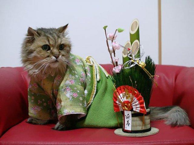 Pisicile in chimonouri fac furori in Japonia - Poza 4