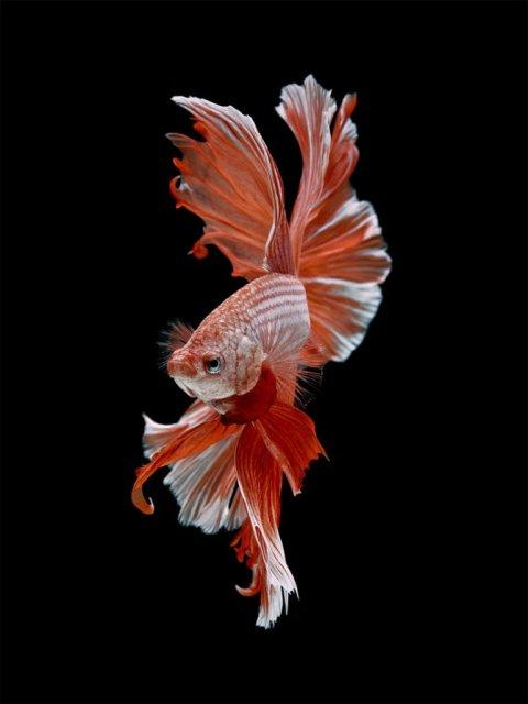 Portrete spectaculoase cu pesti de acvariu - Poza 12