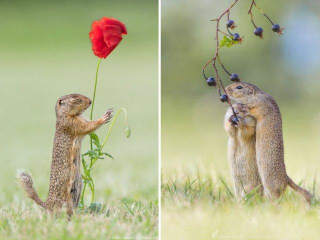 Rozatoare adorabile, intr-un pictorial haios - Poza 5