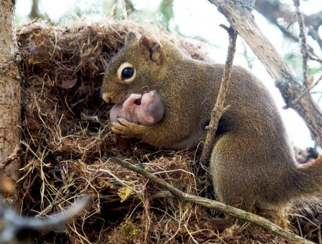Lumea animalelor, in poze de familie - Poza 17