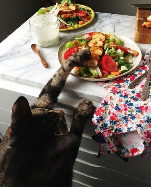Pisici hoate, prinse in actiune - Poza 3