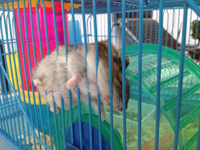 Cele mai haioase pozitii in care dorm animalele - Poza 6
