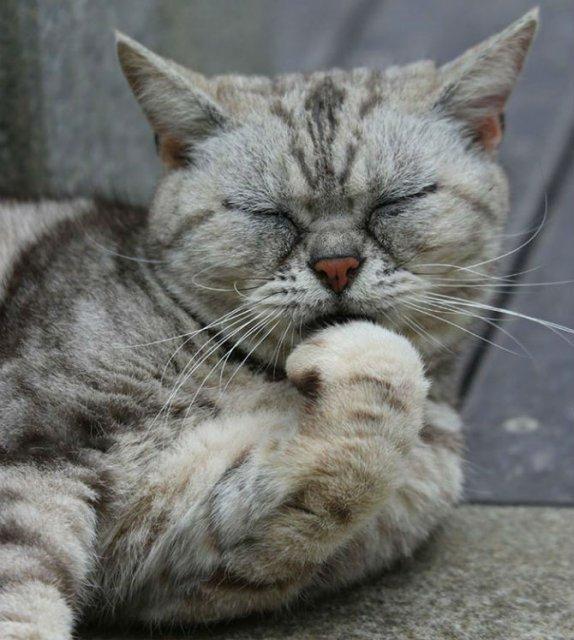 Pisicile din Japonia, in ipostaze haioase
