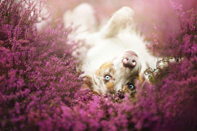 Cele mai frumosi caini, in poze de exceptie - Poza 10